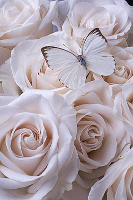 White Butterfly On White Roses Poster