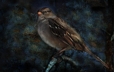 White-crowned Sparrow Poster by Barbara Manis