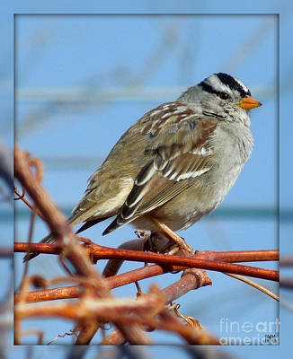 Poster featuring the photograph White Crowned Sparrow by Heidi Manly