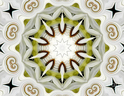 White Daisies Kaleidoscope Poster by Rose Santuci-Sofranko