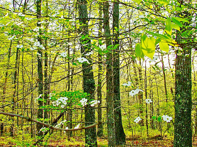 White Dogwood In Meriwether Lewis Campground At Mile 386 Of Natchez Trace Parkway-tn Poster