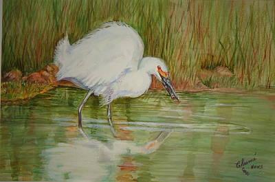 White Egret Wading  Poster