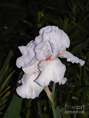 White Flower At Night Poster