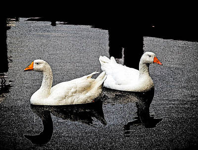 White Geese Poster
