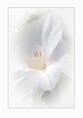 White Glad Poster