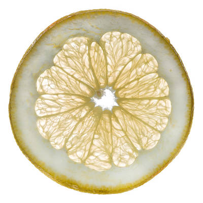 White Grapefruit Slice Poster by Steve Gadomski