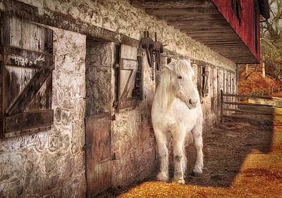 White Horse By An Old Barn Poster