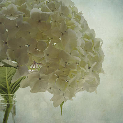 Poster featuring the photograph White Hydrangea by Sally Banfill