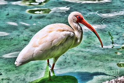 White Ibis On Lake Eola By Diana Sainz Poster by Diana Sainz