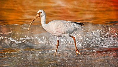 White Ibis Stroll Poster by Betsy Knapp