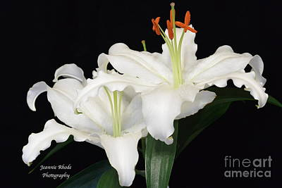 Poster featuring the photograph White  Lilies by Jeannie Rhode