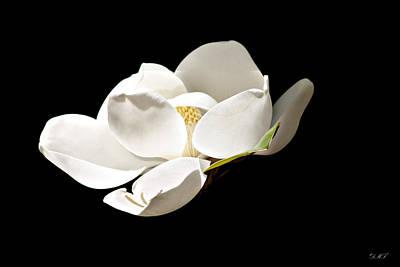 White Magnolia  Poster