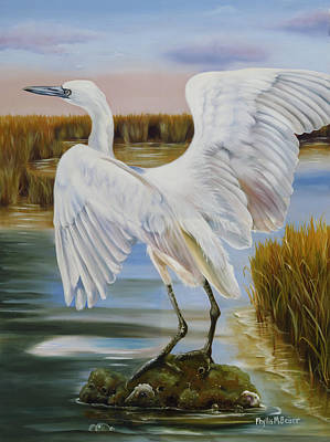 White Morph Reddish Egret At Creole Gap Poster by Phyllis Beiser