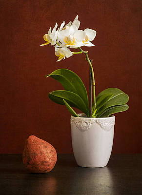 White Orchid Poster by Eduard Moldoveanu