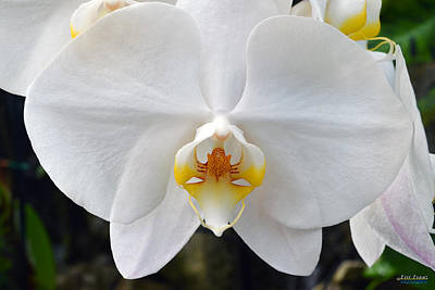 Poster featuring the photograph White Orchid by Aloha Art