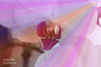 White Orchid In Rays Poster by Augusta Stylianou