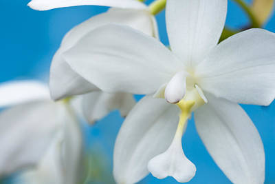 Poster featuring the photograph White Orchid by Leigh Anne Meeks