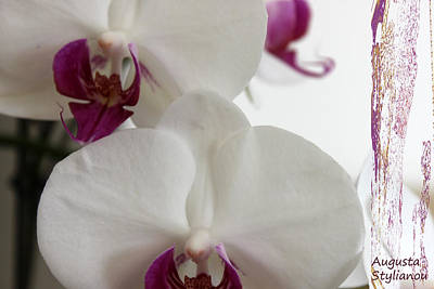 white Orchids and Landscape Poster