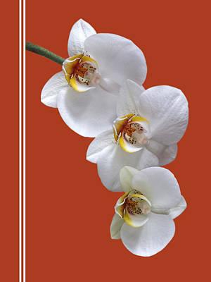 White Orchids On Terracotta Vdertical Poster by Gill Billington