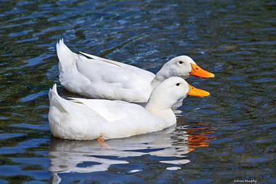 White Pekin Ducks #2 Poster
