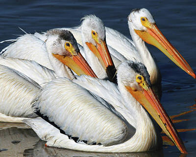 White Pelican Quartet, Summer Lake Poster