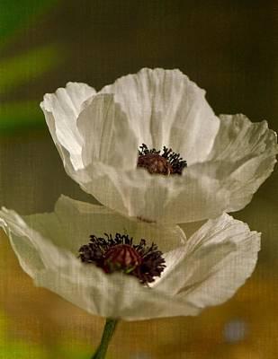 White Poppies Poster by Simone Ochrym