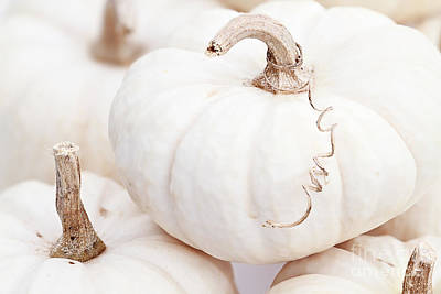 White Pumpkin Macro Poster by Stephanie Frey
