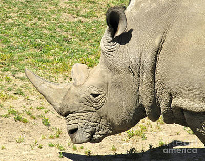 White Rhinoceros Portrait Poster by CML Brown