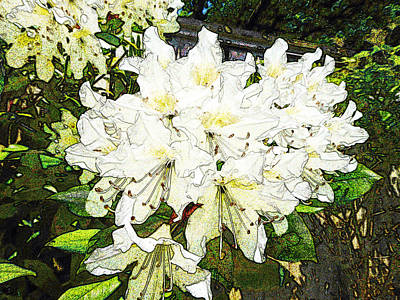 Poster featuring the photograph White Rhodo Chalk by Laurie Tsemak