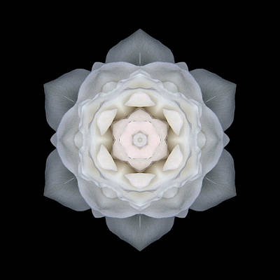 White Rose I Flower Mandala Poster