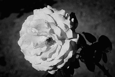 White Flower Poster by John Rossman