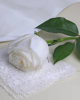 White Rose Poster by Krasimir Tolev