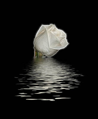 White Rose On Black Poster by Sandy Keeton