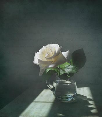 White Rose Still Life Poster by Deborah Smith