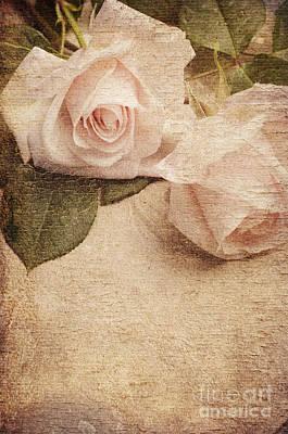 White Roses Poster by Jelena Jovanovic