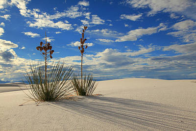 White Sands Afternoon 2 Poster by Alan Vance Ley