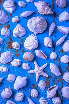 White Sea Shells On Blue Board Poster by Garry Gay