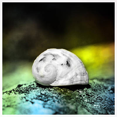 White Shell On A Rock Poster by Tommytechno Sweden