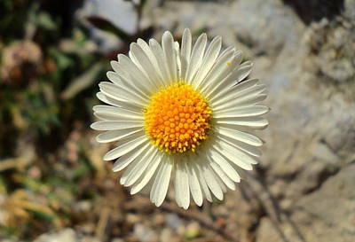 White Wild Flower Poster