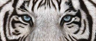 White Tiger Eyes Painting Poster