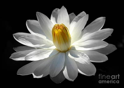 Poster featuring the photograph White Water Lily #2 by Lisa L Silva