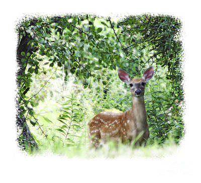 Whitetail Fawn Poster by Deborah Johnson