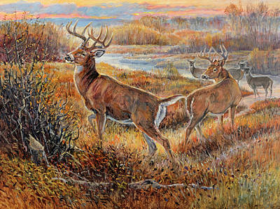 Whitetail Sunrise Poster by Steve Spencer