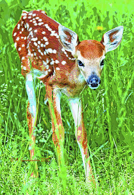 Poster featuring the photograph Whitetailed Deer Fawn Digital Image by A Gurmankin