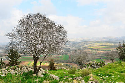 Wild Almond Tree In Beautiful Scenery Poster