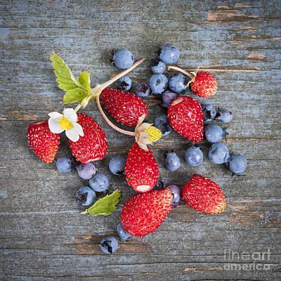 Wild Berries Poster by Elena Elisseeva