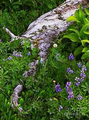 Wild Bouquet Poster