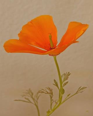 Wild California Poppy No 1 Poster
