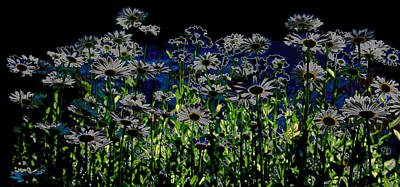 Wild Daisies Poster by David Patterson