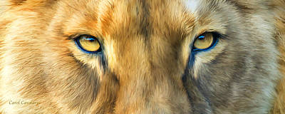 Wild Eyes - Lioness Poster by Carol Cavalaris
